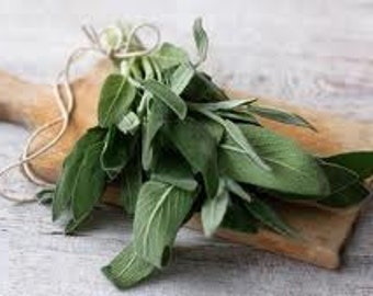 Sage Cooking Herb, Seeds, Perennial, Excellent with Pork or Cheese Dishes, 10 Seeds