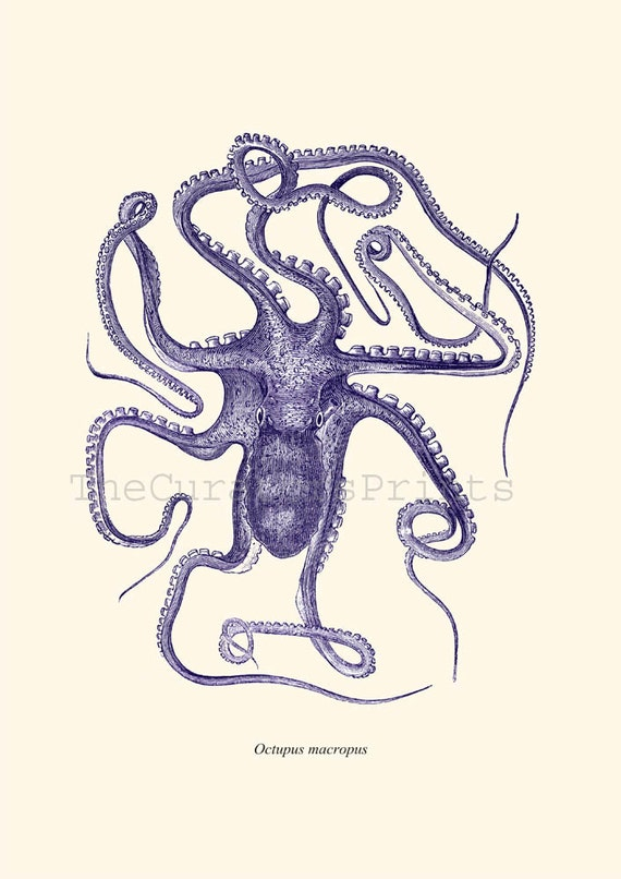 Octopus Blue  Octopus print Nautical print beach house decor wall art wall hanging wall decor art print poster digital Nautical Decor