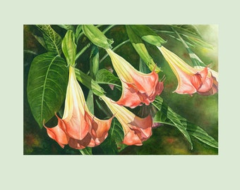 "Archival Giclee Print of  Original Watercolor of a Angel Trumpet Flower Titled ""Blowing In the Wind"". 11""x14"""