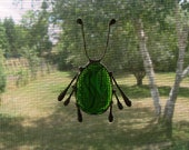 Glass Screen Bugs - Water Beetle