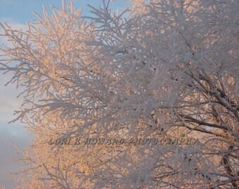 Snow White Tree, Dillingham, AK