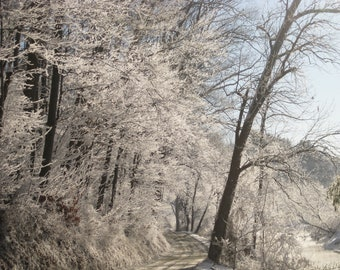 8X10 Frosted Trees Photo, winter wonderland, winter landscape, enchanted forest, woodland decor, rustic cabin decor, peaceful art, snow ice