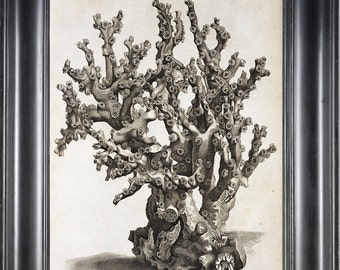 CORAL PRINT Ellis  Art Print 19 Beautiful Antique Sea Ocean Black and White Coral Nature to Frame Home Decoration Wall Hanging