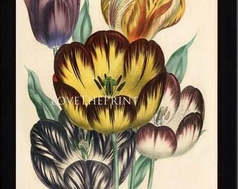 BOTANICAL PRINT Loudon Flower 8x10 Botanical Art Print 13 Beautiful Antique Parrot Tulip Flowers Garden