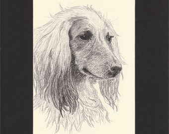 Afghan Hound Vintage Dog Print by C.Francis Wardle - 1935 Print of Drawing, Mounted with Mat