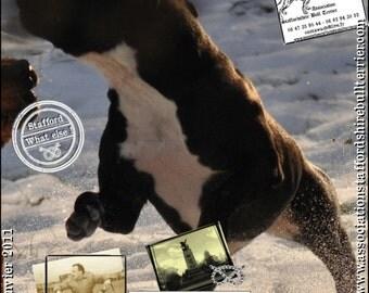 Magazine spécialisé Staffordshire Bull Terrier Janvier 2011