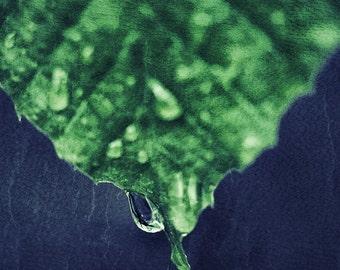 Green Leaf Macro - Photography --  8x12