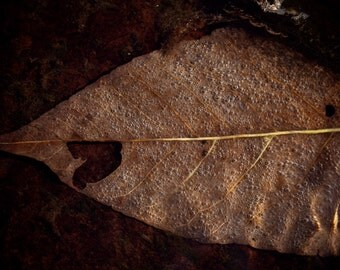 Underwater Autumn Brown Fall Leaf - Photography --  8x12