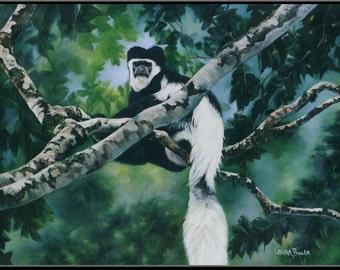 "Colobus Monkey 16"" x 10"" Print"