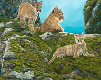 "6"" x 6"" Print of Cougars Mountain Lions, Cubs"