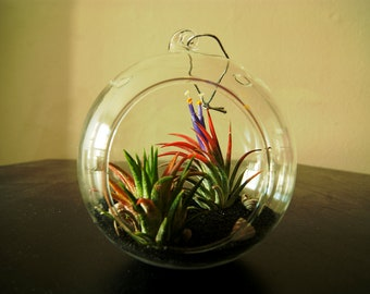 Air Plant Terrarium with Sand