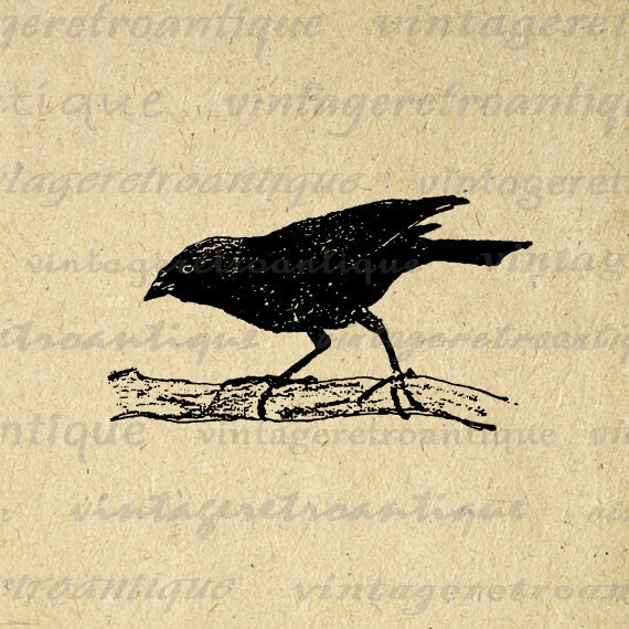 Digital Graphic Black Bird Download Vintage Image Printable Antique Clip Art for Transfers Printing etc HQ 300dpi No.252B