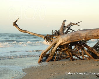 Bone Yard Beach at Botany Bay on Edisto Island South Carolina 3 (PR) (canvas)