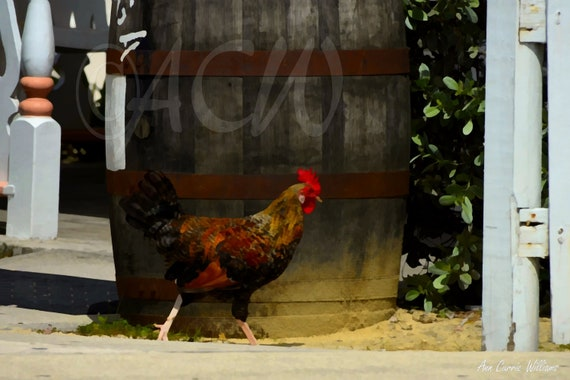 Rooster (canvas)