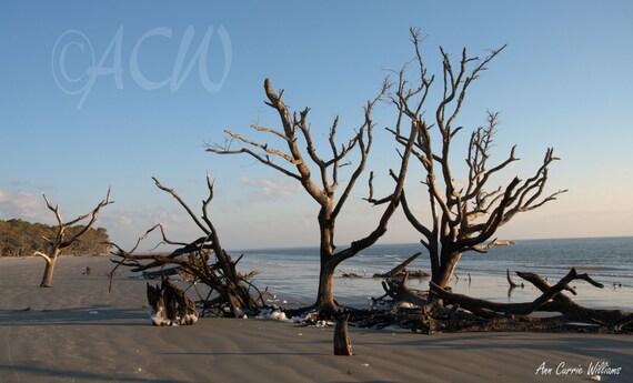 Bone Yard Beach on Hunting Island South Carolina 1 (PR) (canvas)