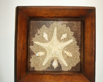 Starfish Shadowbox 2