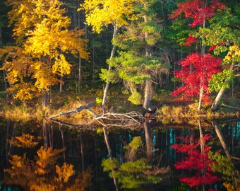Fall Reflections, New England, Archival Pigment Print in white mat