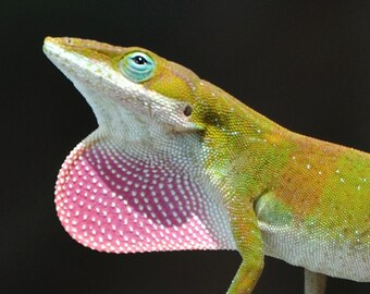 Fine Art Photography - The Lizard King