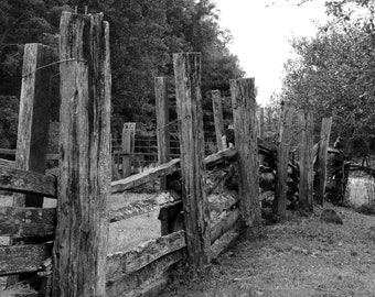 Fine Art Photography - The Fence. High quality color print for home decor