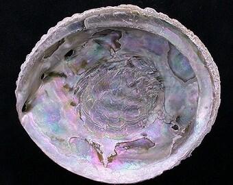 4 inch abalone shell free shipping
