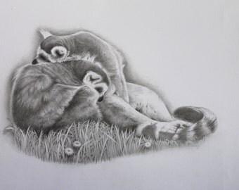 Cuddle Up - Ring Tailed Lemurs - Fine Art  Original Pencil Drawing-Animal Lover - Fine Art - Animal Artist