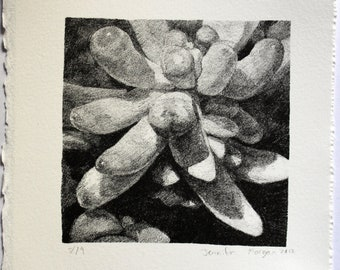 Stone litho Plant succulent still life 14x14cm