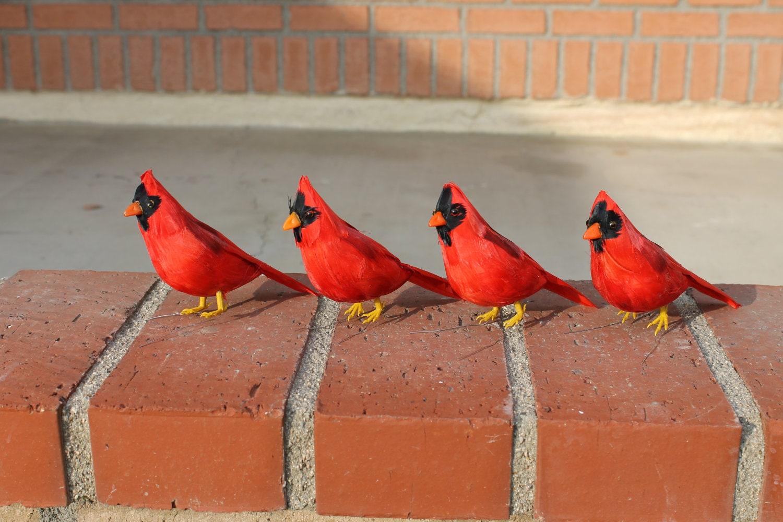 Furry Animal Feather Red Cardinal x4pcs Bird Taxidermy Small