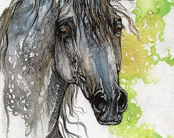 Piaff polish arabian stallion watercolor painting