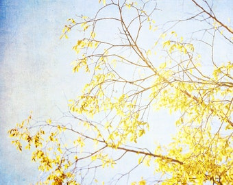 Autumn Tree Fine Art Photography- Tree, Fall Colors, Leaves, Nature, Golden,Yellow, Blue Sky, Dreamy Wall Decor - Golden Sky 5x5