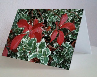 Holiday Colors from Colorado - 5 Card Set Fine Art Photographs