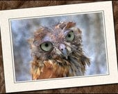 3 Screech Owl Photo Note Cards - 5x7 Owl Card Set - Blank Bird Note Cards Handmade - Owl Greeting Cards Handmade With Envelopes (IN32)