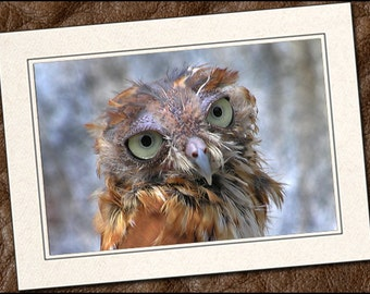 3 Screech Owl Photo Note Cards - Owl Cards - 5x7 Owl Note Cards - Blank Bird Note Cards - Owl Greeting Cards (IN32)