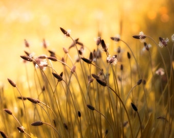 Nature Photography, Wild flowers, Meadow, Sunny, Yellow, Plantain.