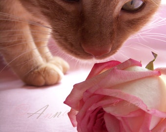 Paws & Smell Roses Sanctuary Donation Signed Fine Art Photography Charity Print- Orange tiger cat pink rose photograph- home decor art
