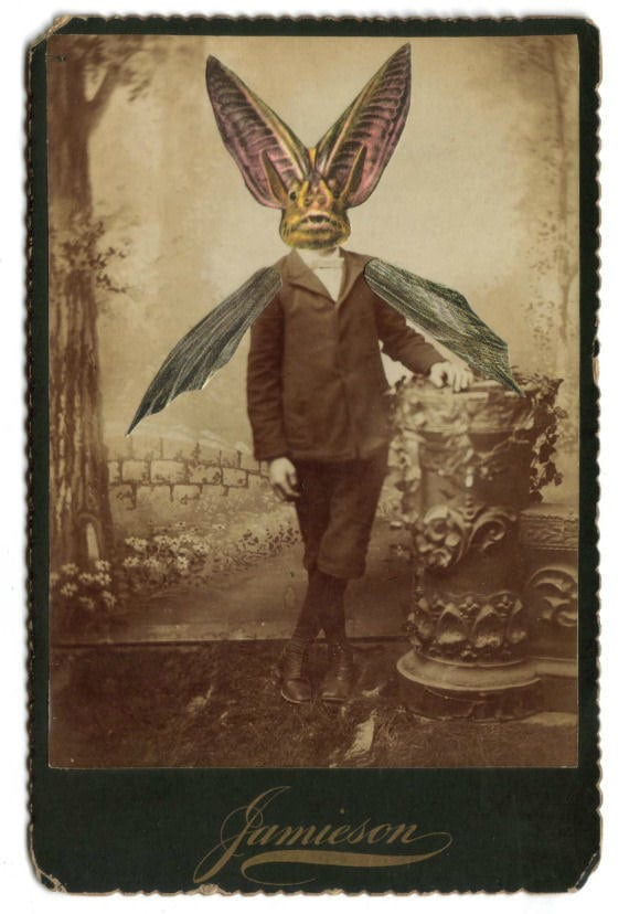 Photo collage victorian gothic bat boy weird goth halloween