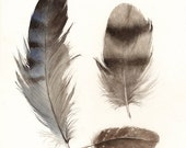 """feathers painting, watercolor, art, wall, decor, earth tones, """"Found Feathers no. 3"""" Large Archival Print"""
