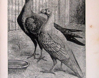 1880 Carrier Pigeons Birds 2 Sided Illustration Black and White Vintage Antique Book Plate