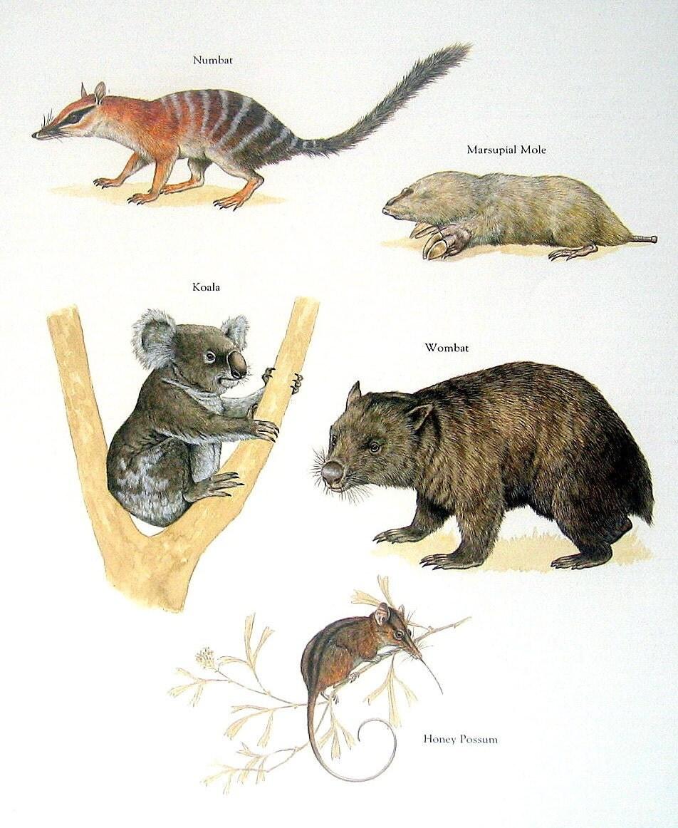 Monkey Island  Rat Box