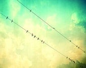 Turquoise photography, Fine Art Print, Birds on a wire, wall decor, Romantic Art, wall hanging, wall art, bird photograph, turquoise decor