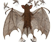 Fruit Bat Specimen, giclee art print, watercolor reproduction, illustration, nature science, creatures of the night