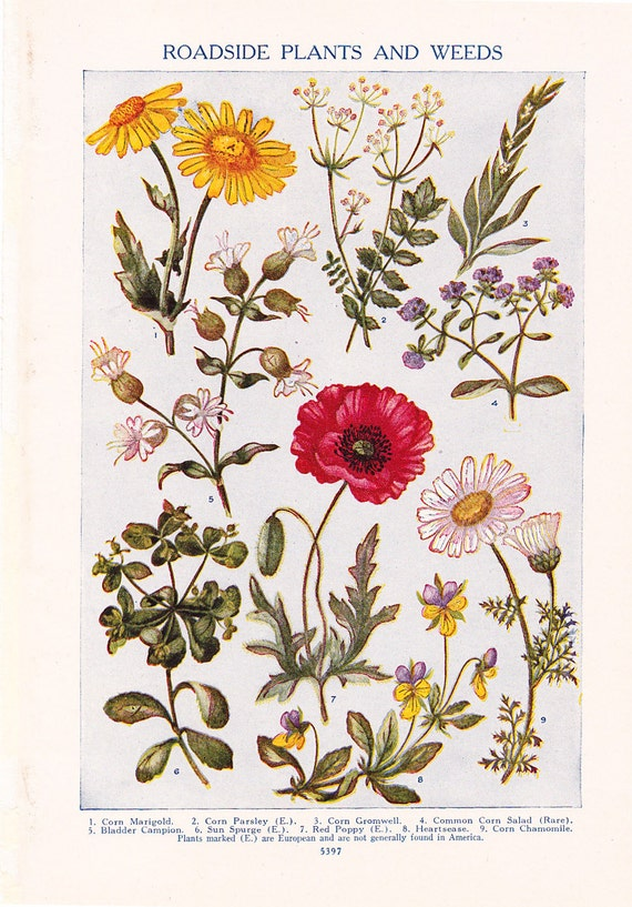 1947 Flower Print Vintage Plant Home Decor Art Illustration