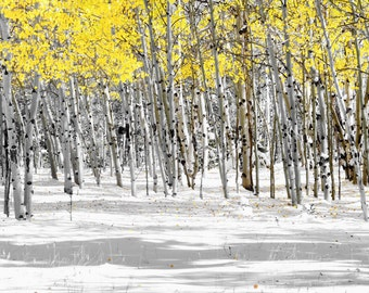 Aspen Trees Snow Wintery Fall Forest Trees Wall Art Colorado Mountains Woods Yellow Leaves Rustic Cabin Lodge Photograph