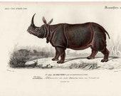 1849 RHINOCEROS ANTIQUE ENGRAVING - original antique print - rare and elegant by orbigny