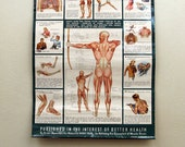 1940s Anatomical Wall Chart : Vintage Advertising Poster