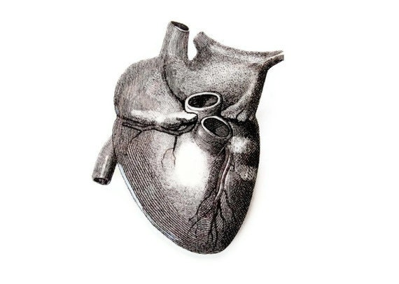Anatomical Heart Brooch Choose Your Color Anatomy Medical Customize Large Pin Black and White Victorian Illustration