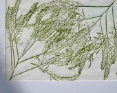 Botanical print, nature print, hand-pulled original art print, direct relief print,  green decor, wildflowers, one of a kind, 16 x 20 inches