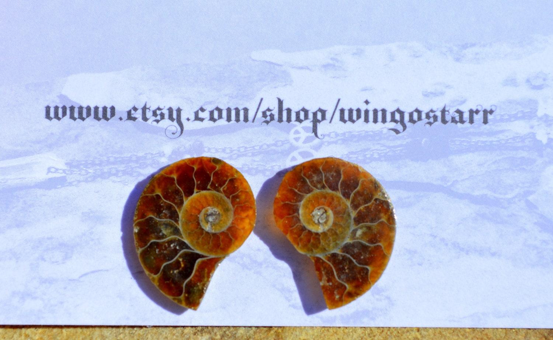 ammonite fossil studs hypoallergenic post handmade