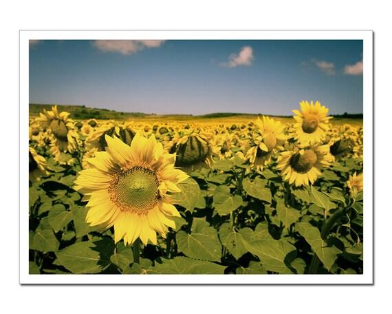 Sunflower Photography, Sunflower Field Farm Crops, green yellow blue Wall Art Print Canvas harvest, Sun