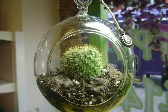 Hanging Cactus Terrarium
