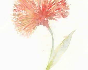 Flower, flower print, giclee, giclee flower, Watercolor art print, watercolor painting,  Red Powderpuff, Original watercolor